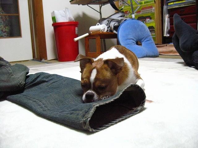f:id:yasukazu01:20110117222810j:image