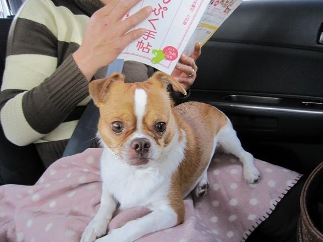 f:id:yasukazu01:20110118221936j:image