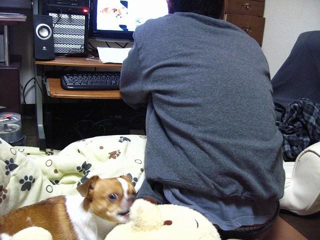 f:id:yasukazu01:20110120215704j:image