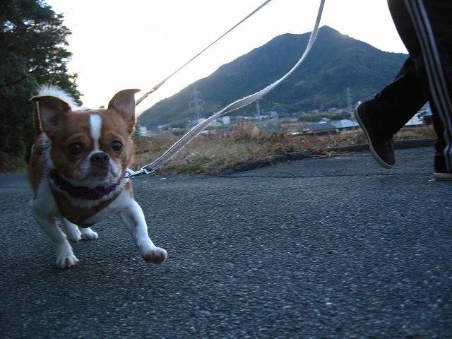 f:id:yasukazu01:20110125214927j:image