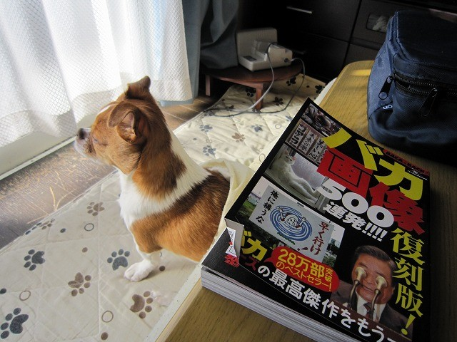 f:id:yasukazu01:20110201215712j:image