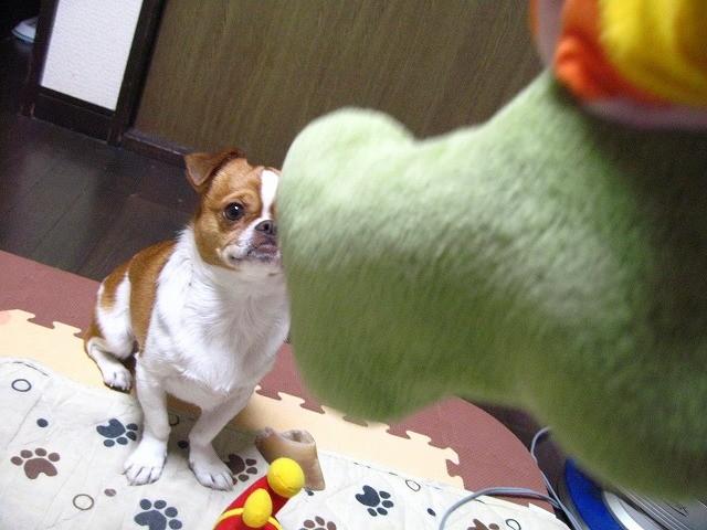 f:id:yasukazu01:20110208222832j:image