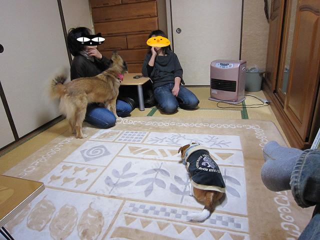 f:id:yasukazu01:20110220213546j:image