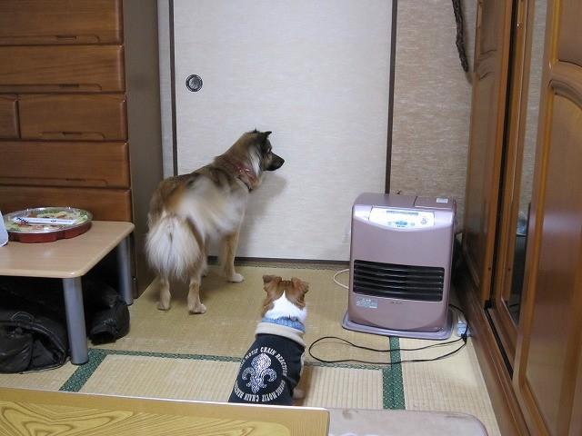 f:id:yasukazu01:20110220214140j:image