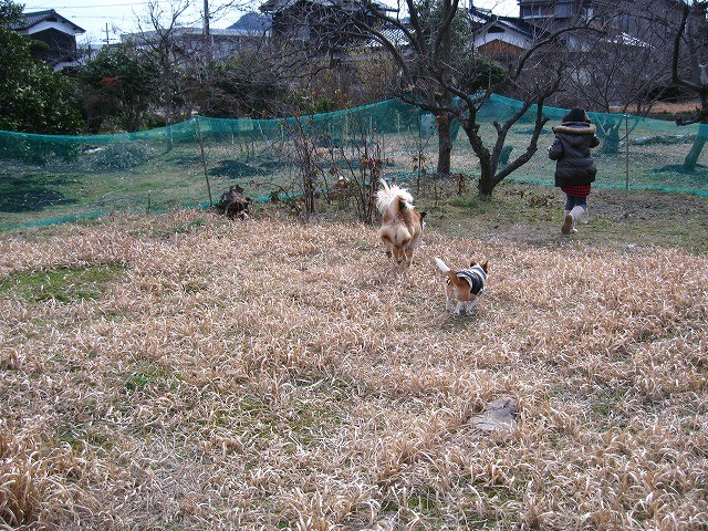 f:id:yasukazu01:20110222214248j:image