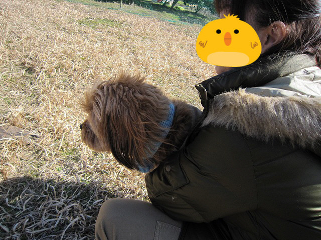 f:id:yasukazu01:20110222222024j:image
