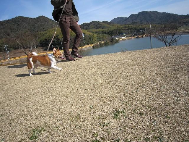 f:id:yasukazu01:20110227201359j:image