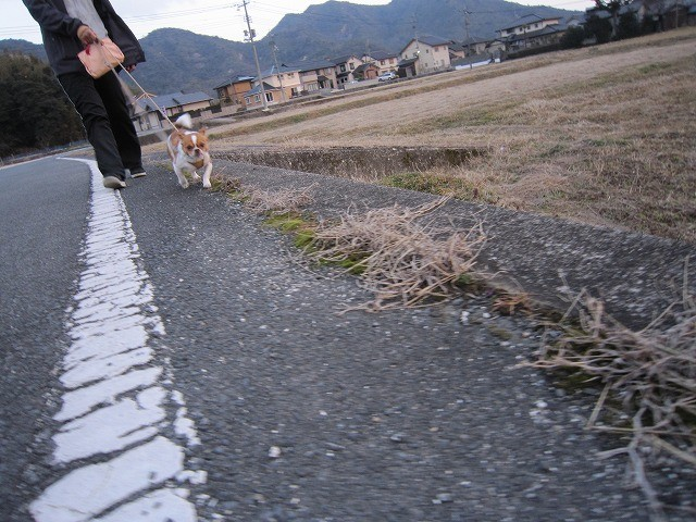 f:id:yasukazu01:20110302211906j:image