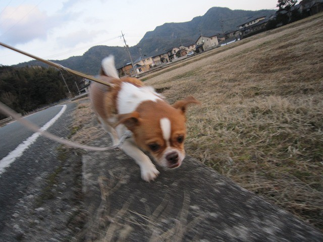 f:id:yasukazu01:20110302211907j:image