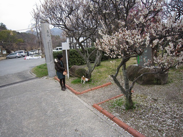 f:id:yasukazu01:20110307210048j:image
