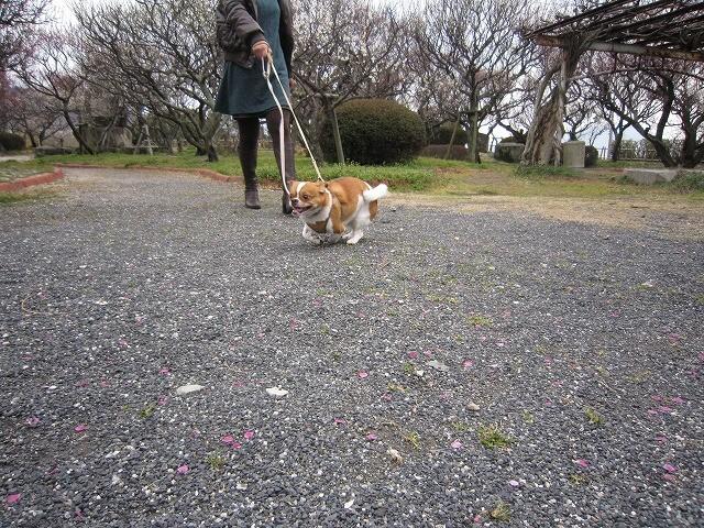 f:id:yasukazu01:20110307214825j:image