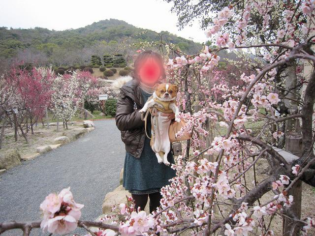 f:id:yasukazu01:20110307215500j:image