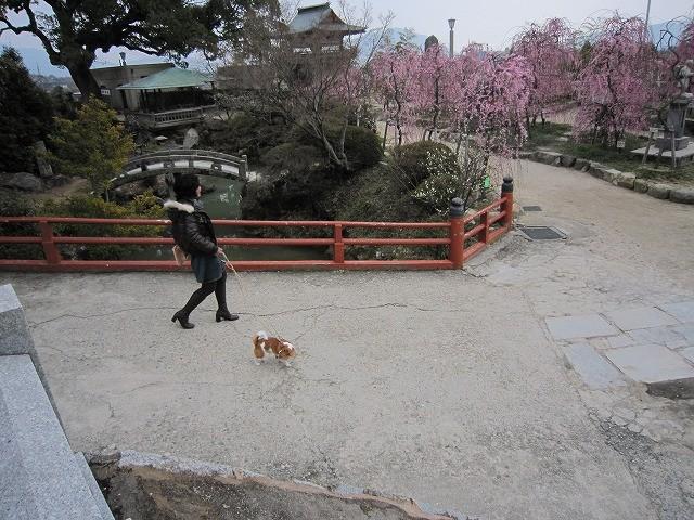 f:id:yasukazu01:20110307221637j:image