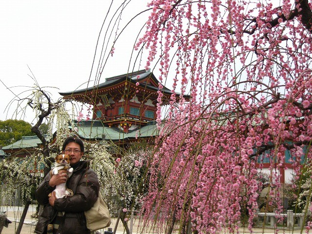f:id:yasukazu01:20110308221429j:image