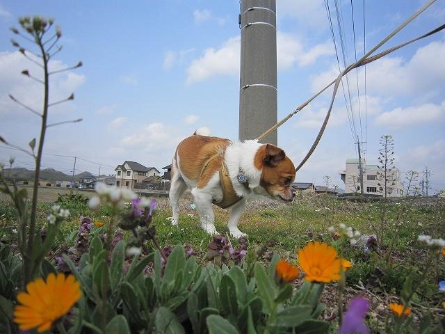 f:id:yasukazu01:20110322213808j:image