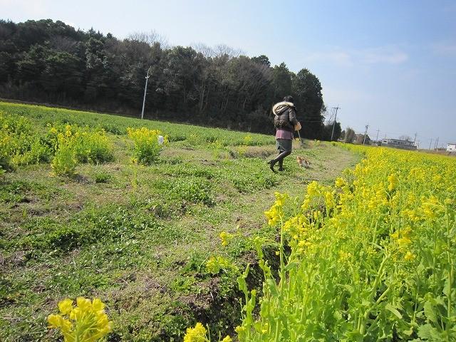 f:id:yasukazu01:20110327201512j:image
