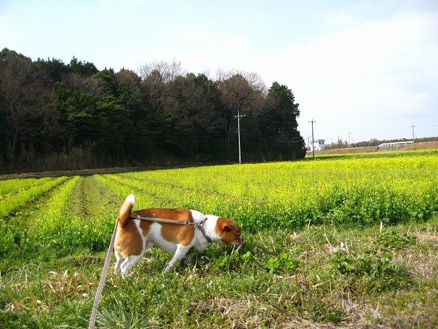 f:id:yasukazu01:20110327202912j:image