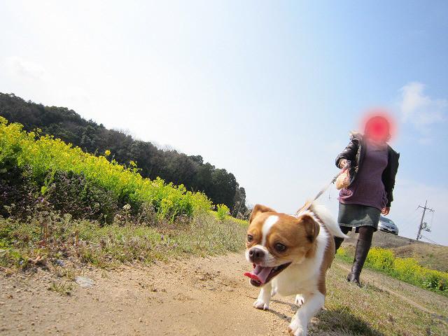 f:id:yasukazu01:20110327203349j:image
