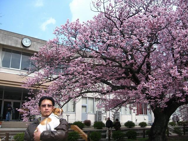 f:id:yasukazu01:20110328215644j:image