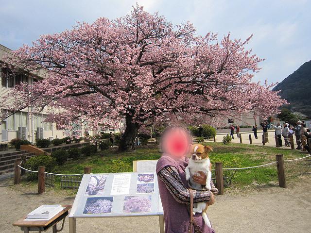 f:id:yasukazu01:20110328220717j:image