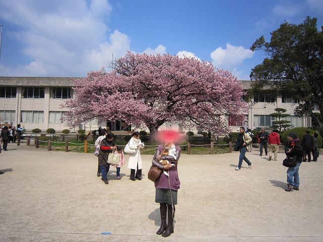 f:id:yasukazu01:20110328221007j:image