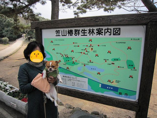f:id:yasukazu01:20110329204414j:image