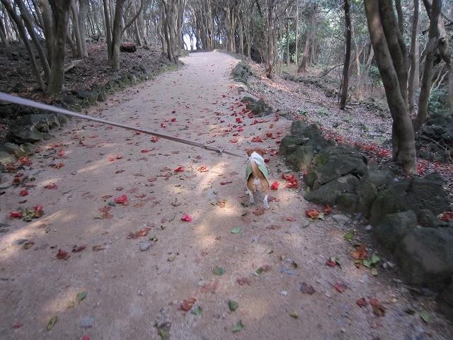 f:id:yasukazu01:20110329211626j:image