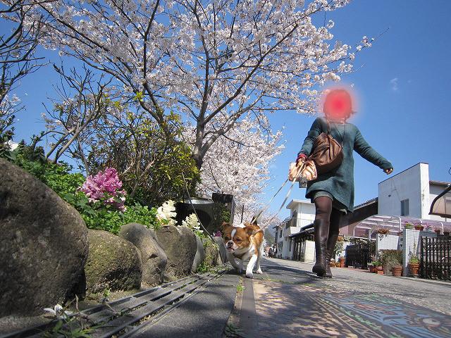f:id:yasukazu01:20110407203904j:image