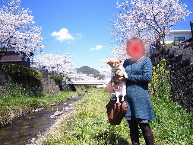 f:id:yasukazu01:20110407203905j:image