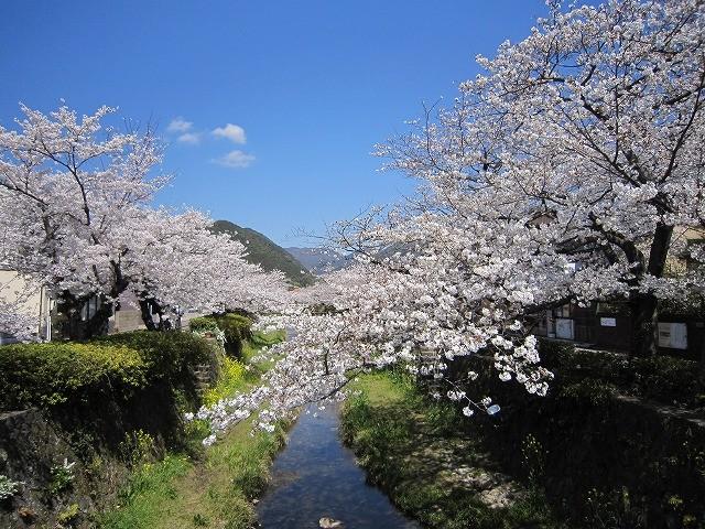 f:id:yasukazu01:20110408215321j:image