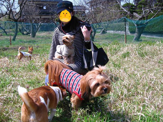 f:id:yasukazu01:20110410225032j:image