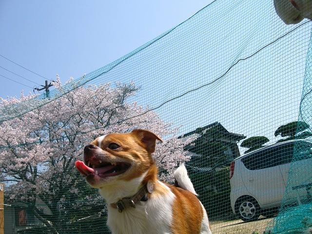 f:id:yasukazu01:20110411215334j:image