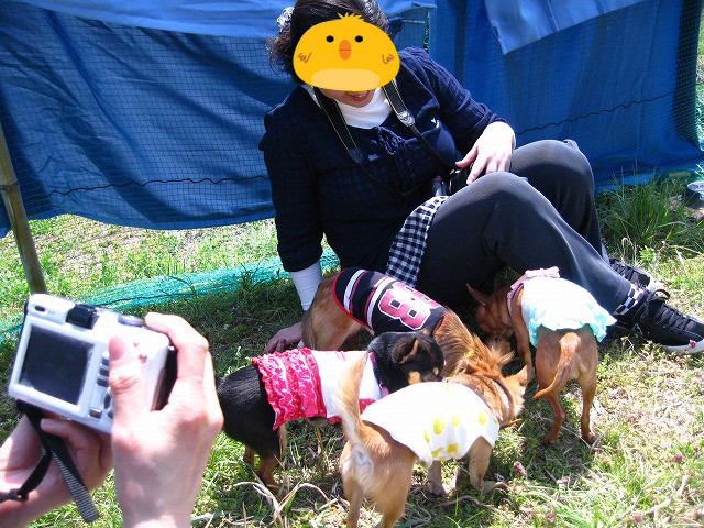 f:id:yasukazu01:20110411222950j:image