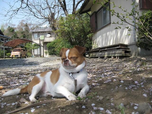 f:id:yasukazu01:20110412223112j:image