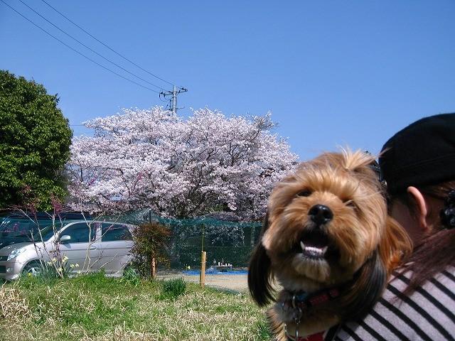 f:id:yasukazu01:20110413202629j:image