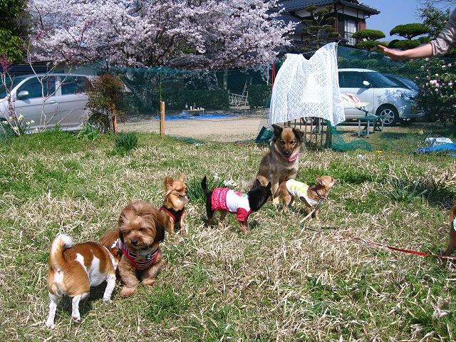 f:id:yasukazu01:20110413203144j:image