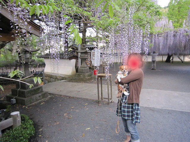 f:id:yasukazu01:20110508201934j:image