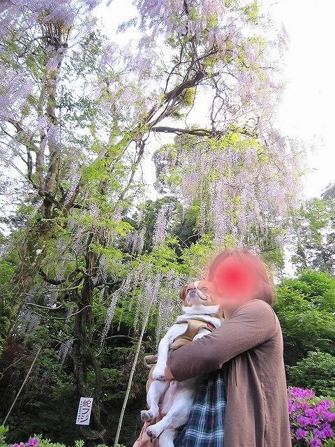 f:id:yasukazu01:20110508201935j:image