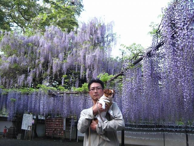 f:id:yasukazu01:20110508203339j:image