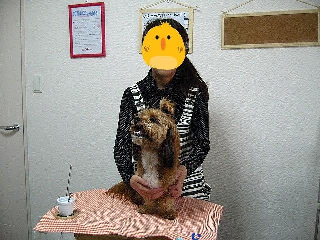 f:id:yasukazu01:20110516211835j:image
