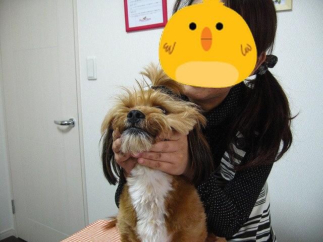 f:id:yasukazu01:20110516211838j:image