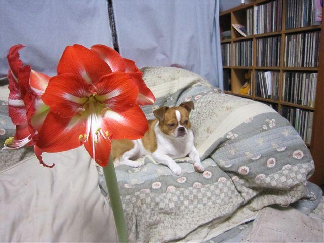 f:id:yasukazu01:20110524214337j:image
