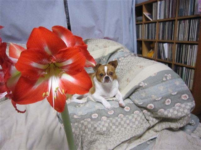f:id:yasukazu01:20110524214345j:image