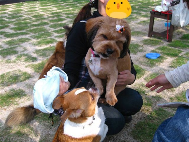 f:id:yasukazu01:20110601160247j:image