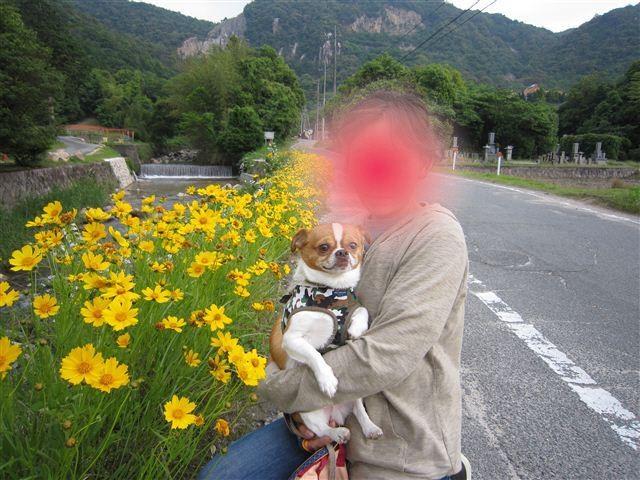 f:id:yasukazu01:20110602180012j:image