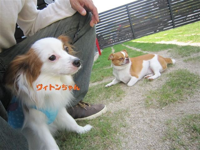 f:id:yasukazu01:20110606105146j:image