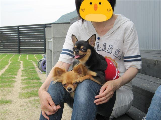 f:id:yasukazu01:20110606114036j:image
