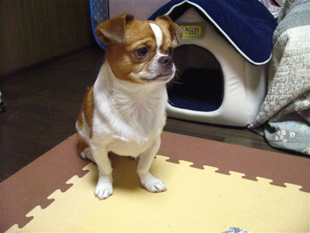 f:id:yasukazu01:20110608211734j:image