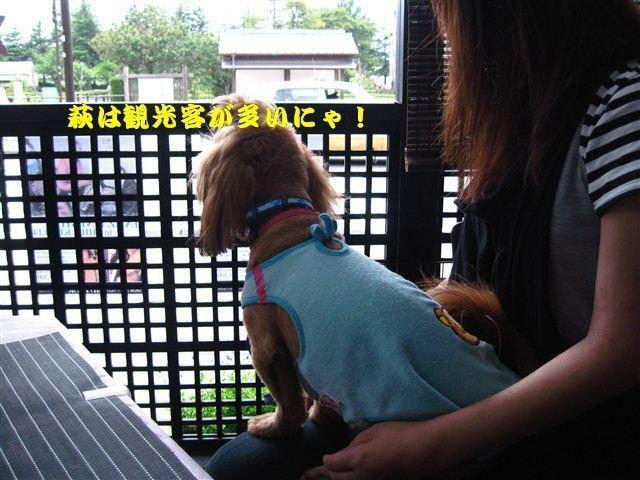 f:id:yasukazu01:20110613124500j:image