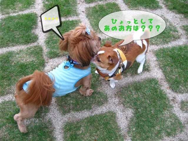 f:id:yasukazu01:20110613154914j:image